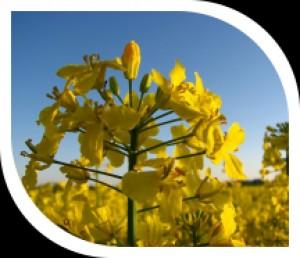 Žemės ūkio sprendimai